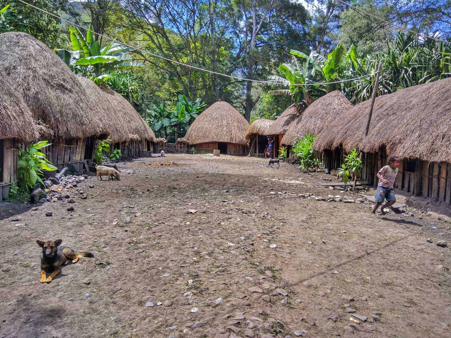 Traditionally Dani tribes lived in circular thatch-roof huts