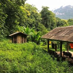 Chiang Dao Jungle Trek Thailand