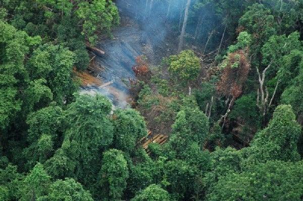 Logging in Koh Kong Cambodia