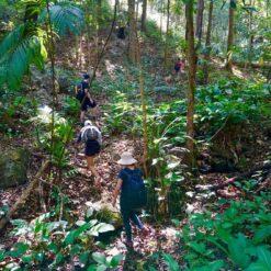 Jungle Trekking Doi Inthanon