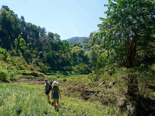 Hiking through the grasslands of Doi Inthanon.
