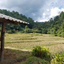 Rice paddies in Doi Inthanon Thailand