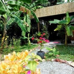 garden-view Lily's Secret Garden Siem Reap Cambodia