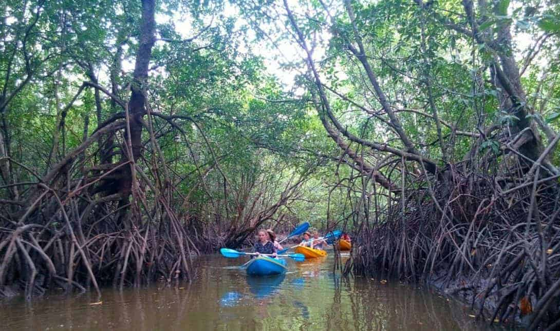 Mangrove Kayaking in Khanom