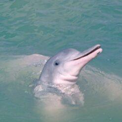 pink-dolphin-Khanom-Thailand