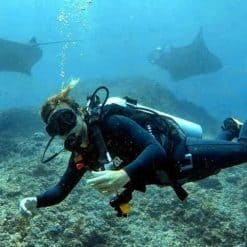 A diver Nusa Lembongan Indonesia