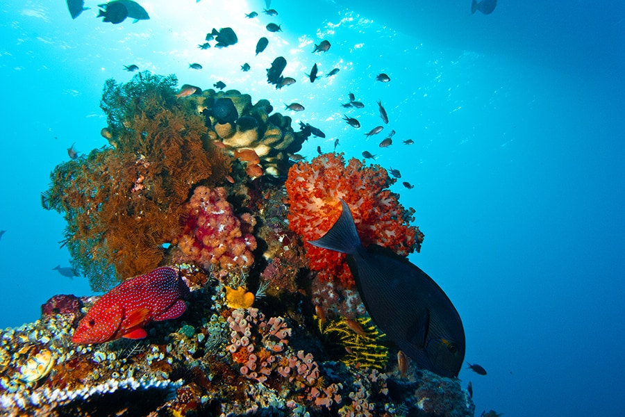 Bright Marine Life - Komodo Diving