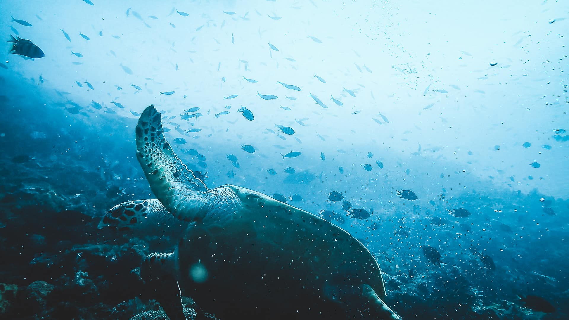 A Sea Turtle and Lots of Fish - Komodo Dive