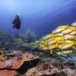 A Diver at Cannibal Rock, Komodo
