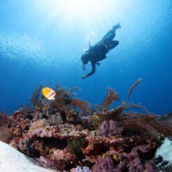 A Diver at Manta Point, Komodo