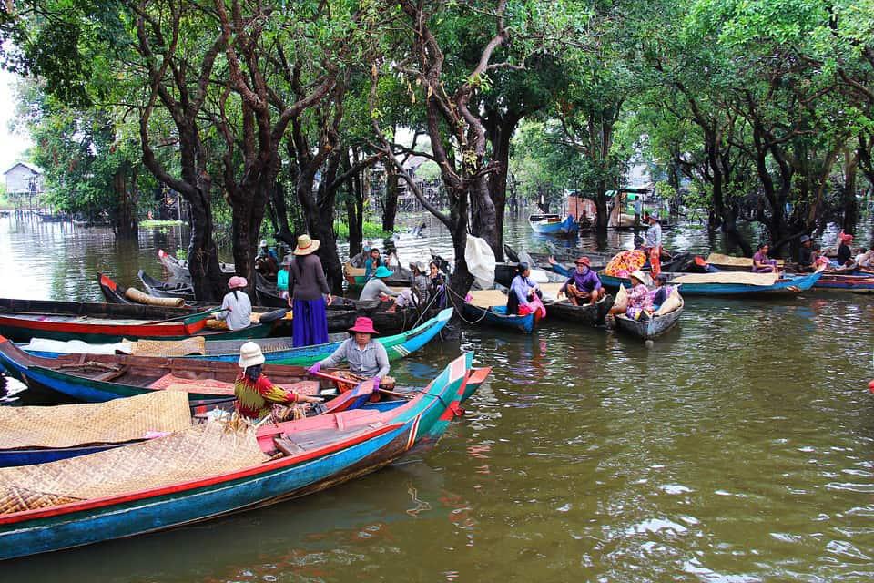 Mangrove swamps of Kampong Phluk