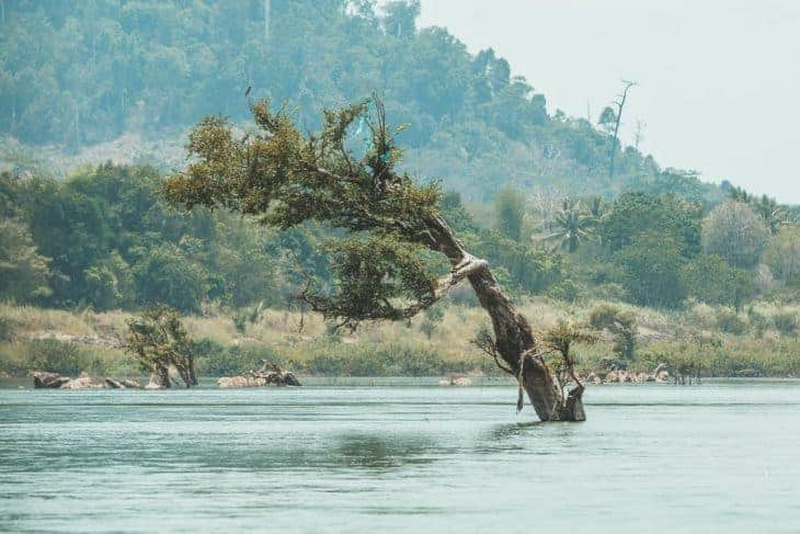 Interesting Trees in the River and Cambodia in the Background