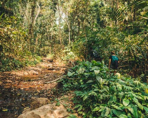 Nam Oun Wilderness Trail Trek | 2 Days, 1 Night | from Luang Namtha