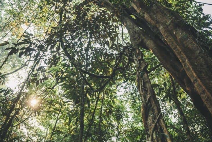 Jungle in Nam Ha NPA