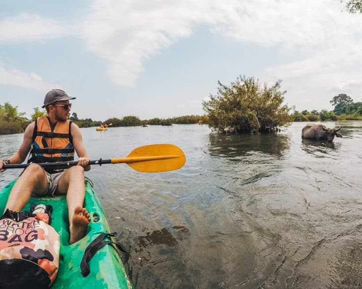 Person kayaks past buffalo