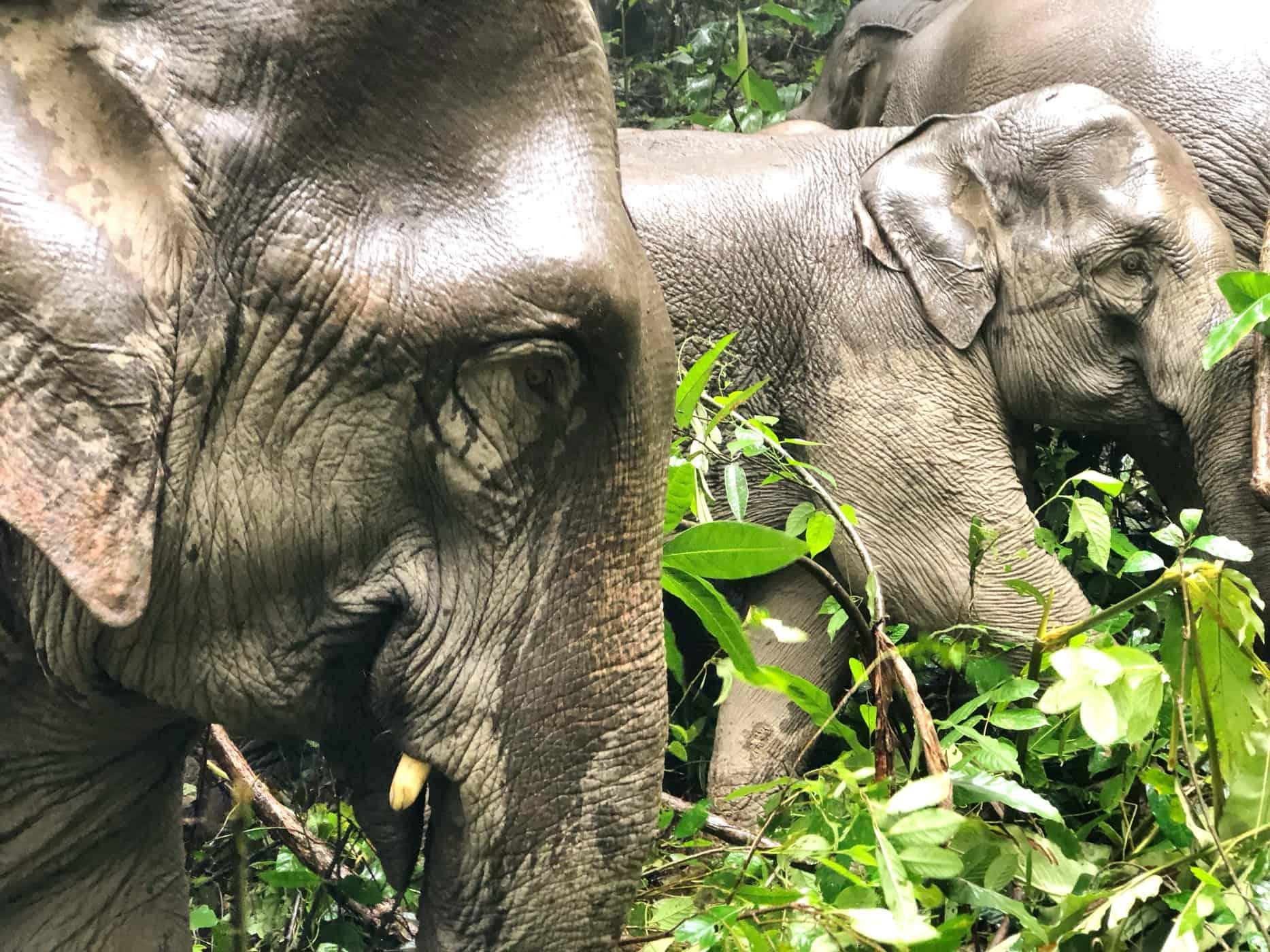 How To Choose An Ethical Elephant Sanctuary Thailand Southeast Asia