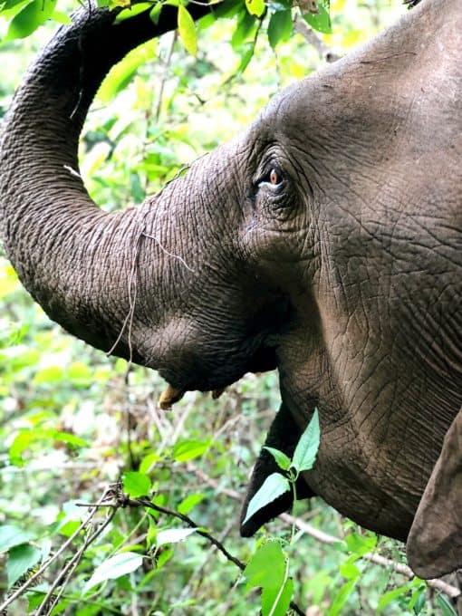 An Elephant's Face Side-On