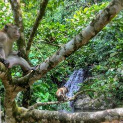 Monkeys in jungle