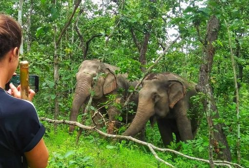 Two Elephants at BEES Sanctuary, North Thailand