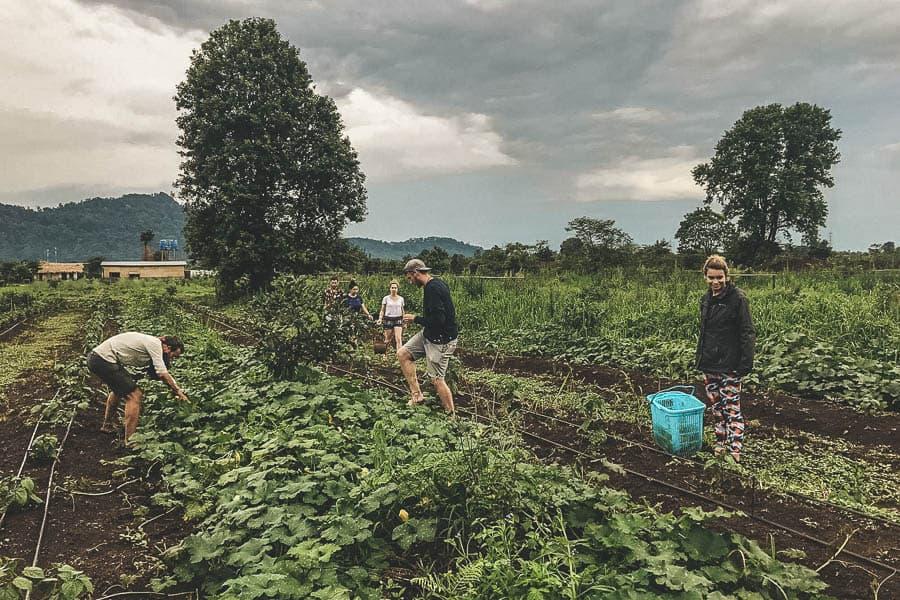 Coffee plantations around Pakse, Laos.