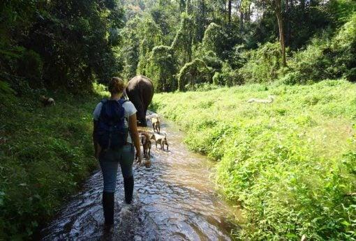 A Traveller Walks Behind An Elephant at BEES