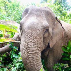 Mo Mo Lo the Elephant Face On