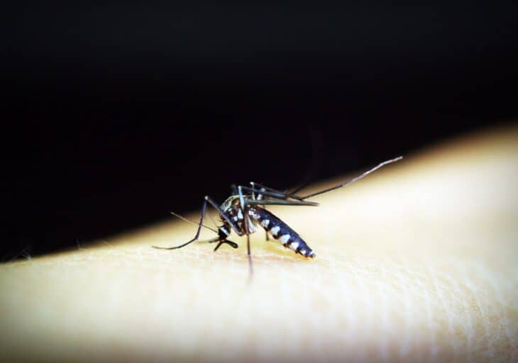 Do You Need to Take Malaria Tablets in South East Asia?