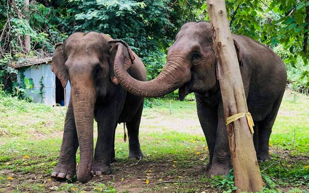 BEES Elephant Sanctuary: A New Kind of Elephant Tourism