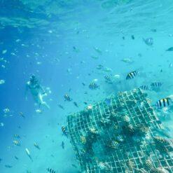 Snorkelling at the secret Gili Islands, Lombok