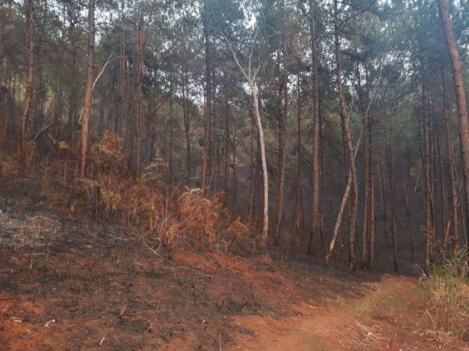 Forest burnt in Ban Rak Thai near the border of Thailand and Myanmar (Mae Hong Son area) - 6th April 2019.