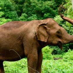 Elephant in EVP jungle
