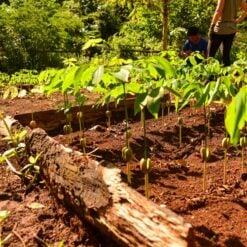 Growing plants at EVP