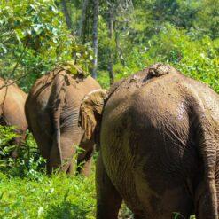 Elephants trek through jungle