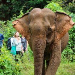 Visitors watch elephant