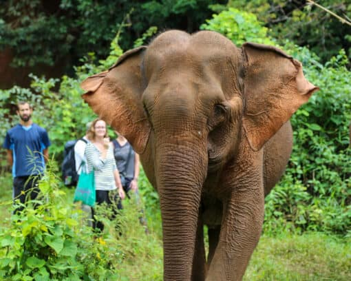 Visitors watch elephant