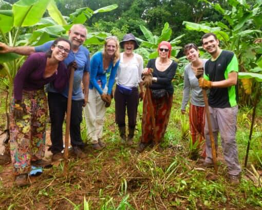 Volunteer work in jungle