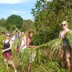 Volunteering - Grass Cutting.