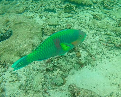 Big fish seen on snorkeling trip