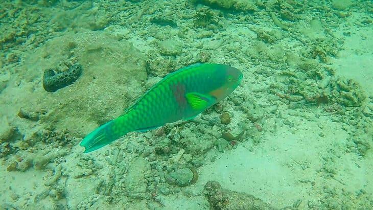 Underwater photo of fish taken during snorkeling trip.