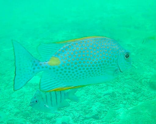 Colourful fish spotted on a snorkeling tour!
