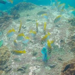 Colourful fish on coral