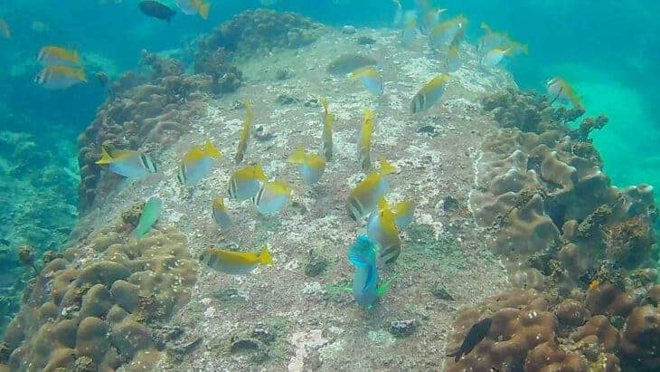 Colourful fish spotted during snorkeling trip.