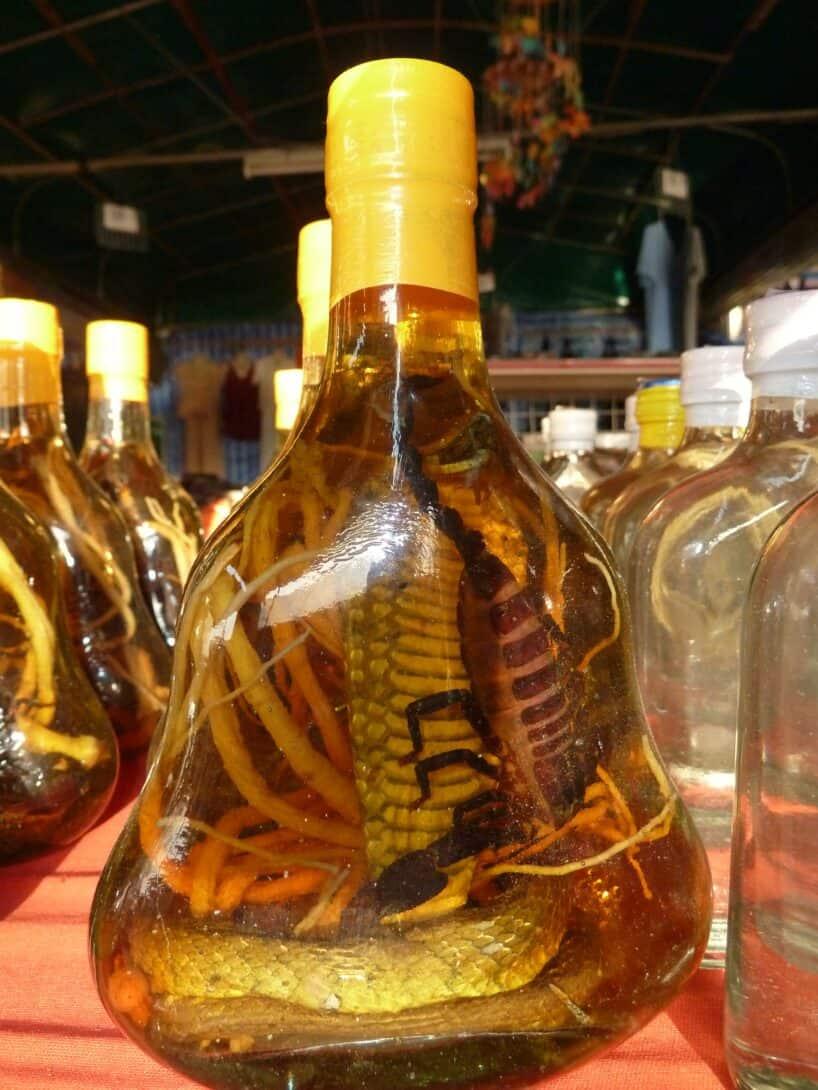 Snake wine in Cambodia