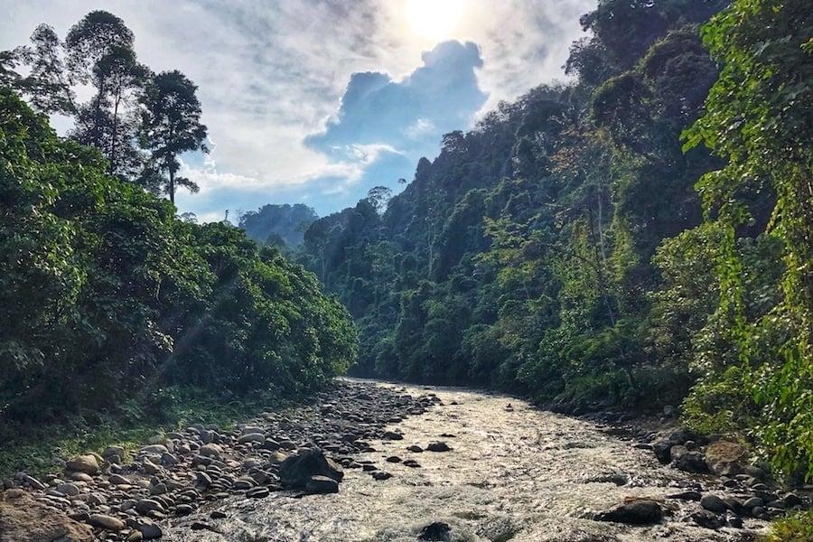 The beautiful scenery of Bukit Lawang.