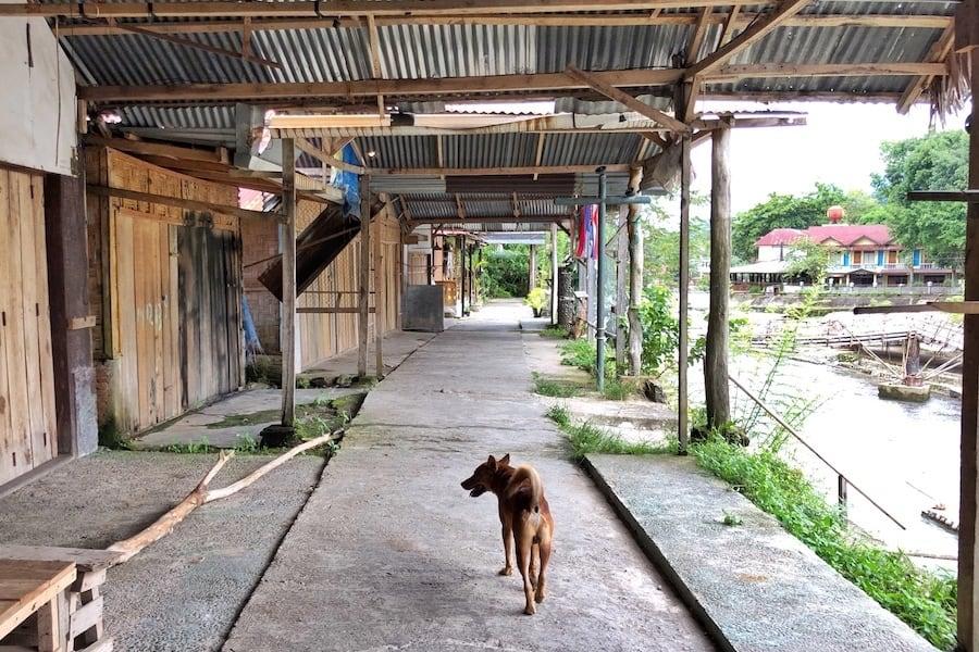 Bukit Lawang Indonesia.
