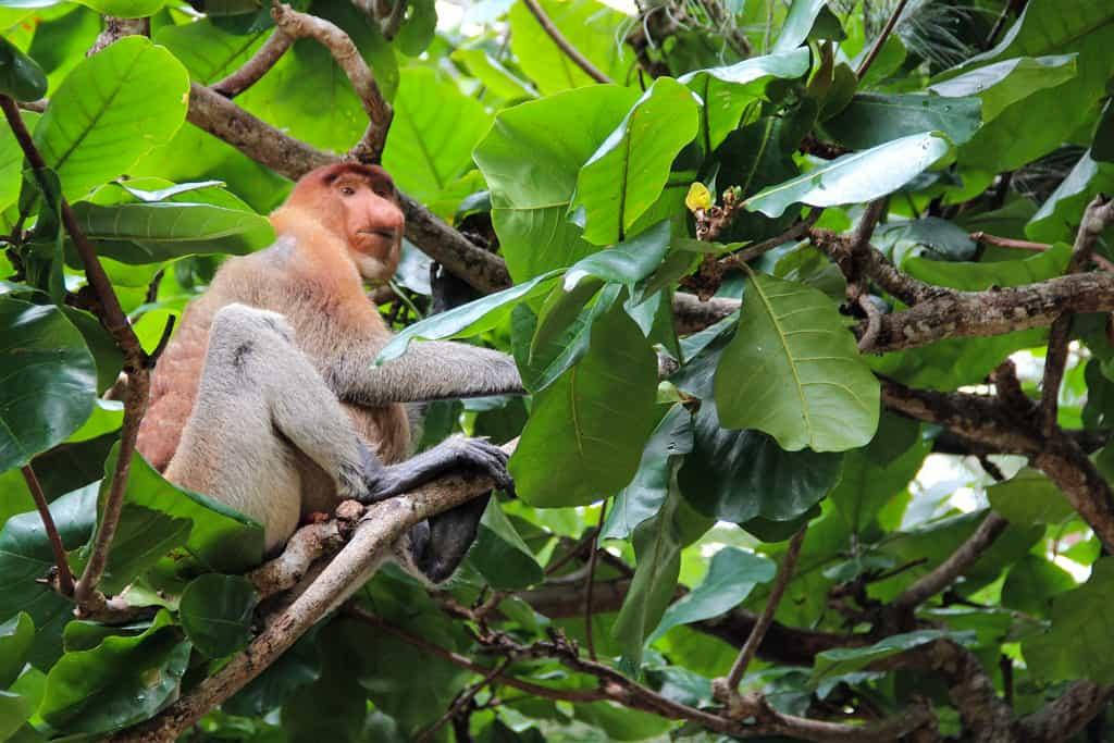 13 Unique Indonesian Animals